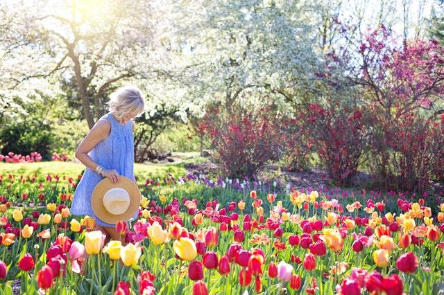 Žena v modrých šatách a s klobúkom v ruke kráča záhradou s rozkvitnutými tulipánmi