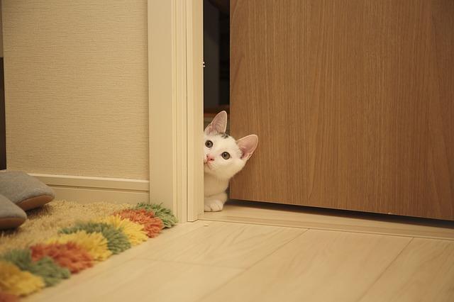 Biela mačka leží v pootvorených hnedých dverách